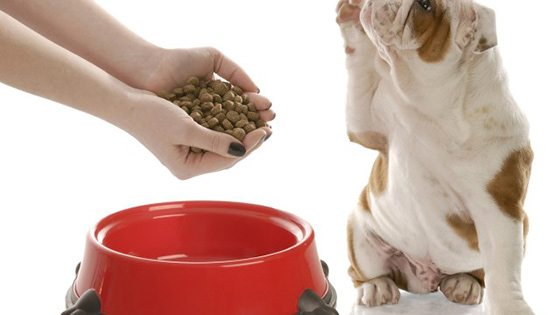 dog by its food bowl