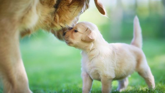 puppy and mummy