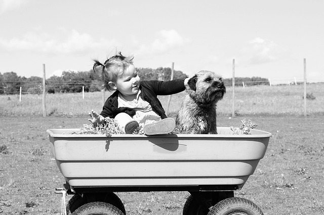 child stroking a dog