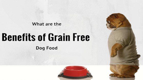 pug with food