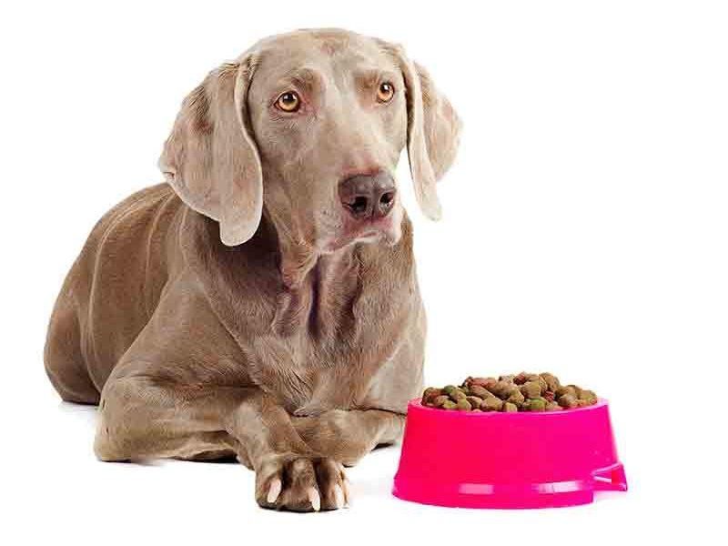 dog with food
