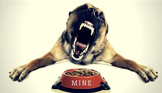 dog with food