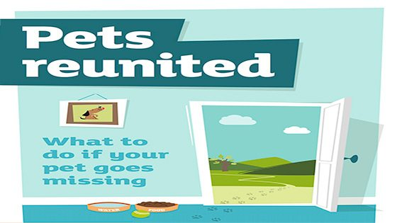 poster for pets reunited