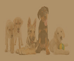 5 puppies sitting
