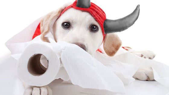 a puppy with toilet roll in its mouth