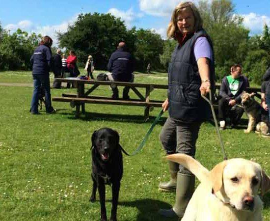 canine coaching social dog walk
