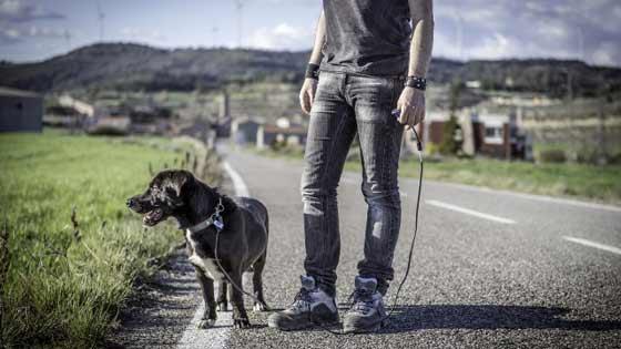 dog be walked